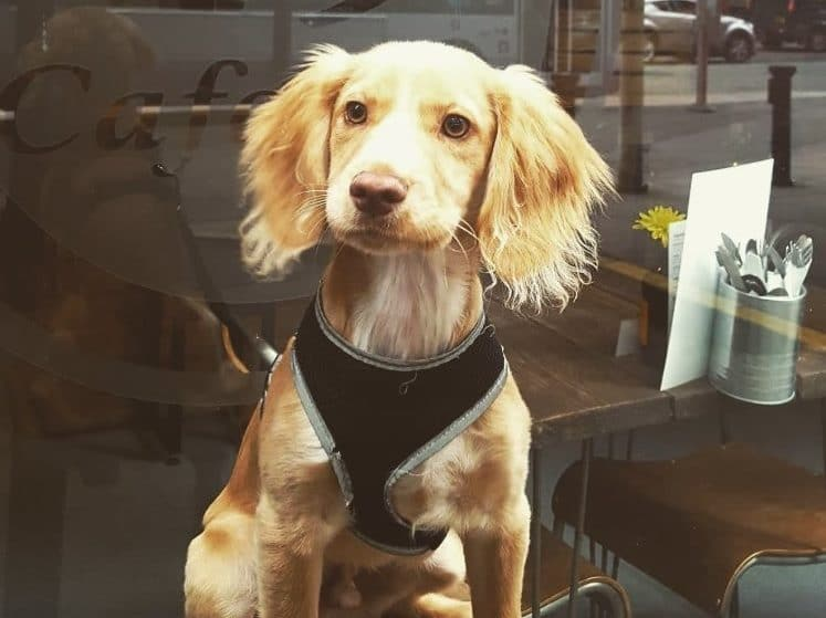 A Manchester Bar Is Hosting A Doggy Date Night