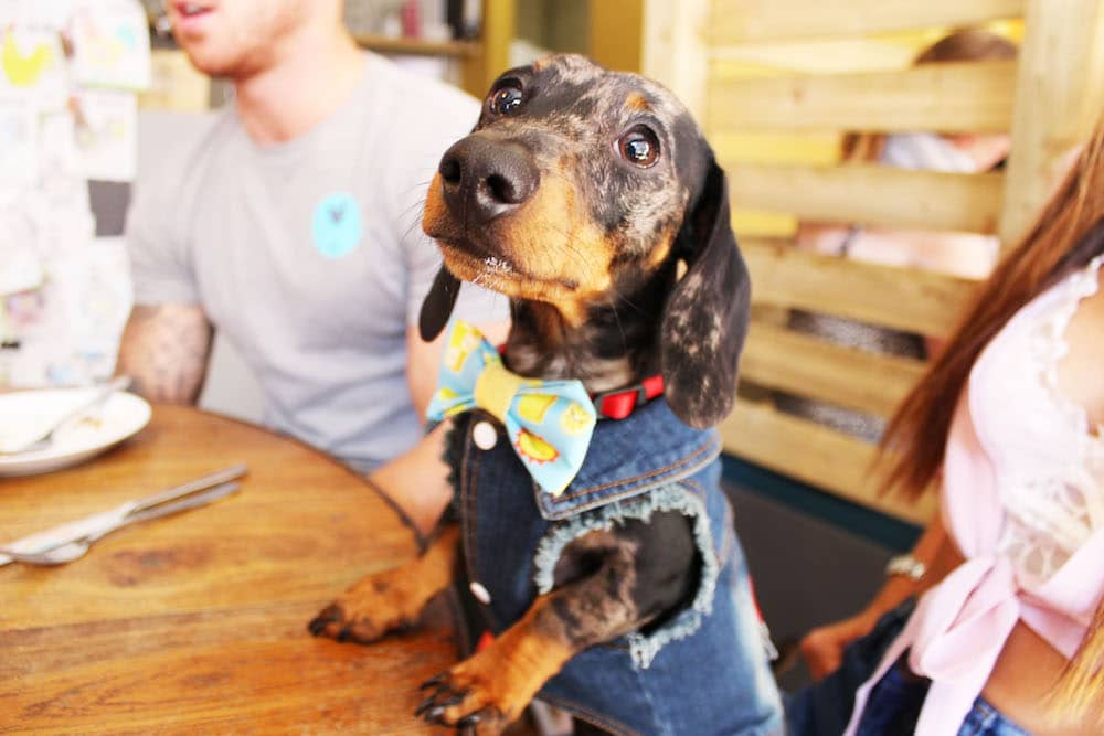 Manchester's First Sausage Dog Cafe, In (Adorable) Pictures