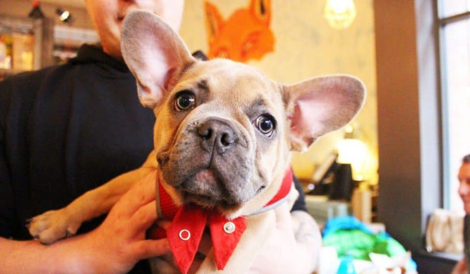 Manchester's Frenchie Cafe, In (Adorable) Pictures