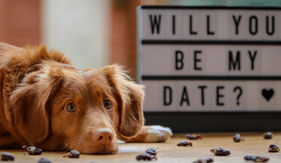 Hatch Is Hosting A Doggy Speed Dating Event This Valentine's Day